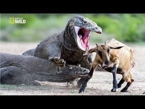 National Geographic - The Most Deadly Apex Predators on Earth - New Documentary HD 2017