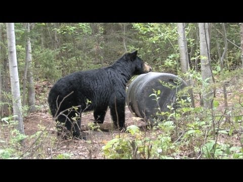 Quebec Bear Hunt