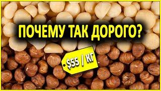 Почему орехи макадамия такие дорогие
