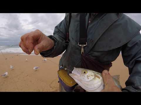 Australian Salmon Fishing Waitpinga Beach SA With Bait Part 2