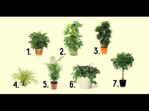 Растения которые очищают воздух в помещении / Plants that clean indoor air