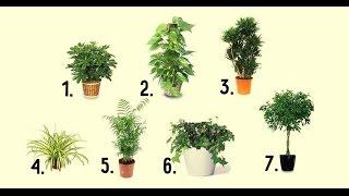 Растения которые очищают воздух в помещении / Plants that clean indoor air(Подпишись - https://www.youtube.com/channel/UC1Apwh59z8ff7ETT7aJNOxg ✓моя группа в вконтакте https://vk.com/poleznoe_tv_youtube ✓моя группа в ..., 2016-01-27T17:37:19.000Z)