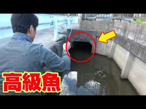 こんな所で「高級魚」が釣れた‼