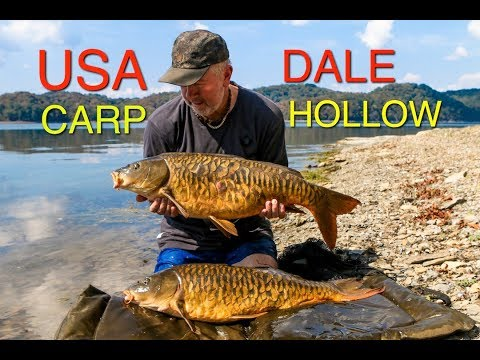 USA Carp   Dale Hollow