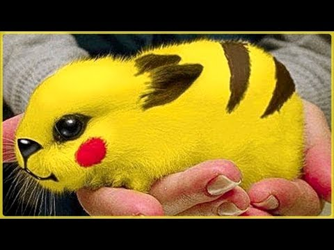 Most Amazing Stuff Magic Tricks in the World - Best Zach King Magic Vines Ever