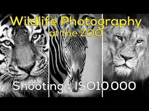 Wildlife Photography at ISO 10,000 - Zoo Photography Yorkshire Wildlife Centre
