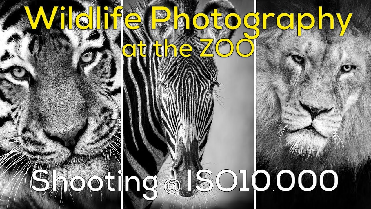 Wildlife photography at iso 10000 zoo photography yorkshire wildlife centre