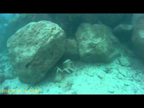 Snorkeling around the Holiday Inn Resort at Montego Bay, Jamaica