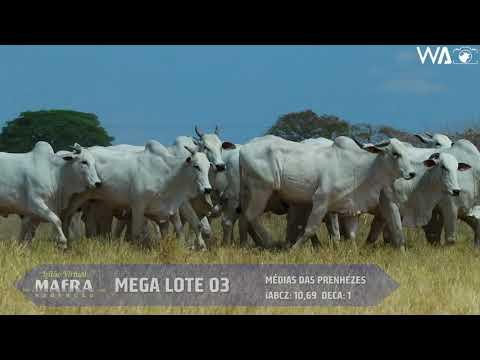 LOTE 52   MEGA LOTE 03