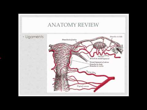Abdominal Hysterectomy - Description, Indications And Questions