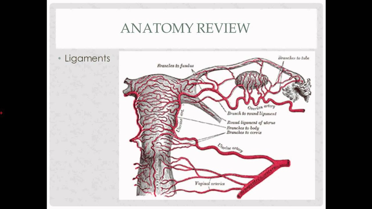 abdominal hysterectomy - description, indications and questions ...