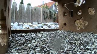 Vogelhaus - 1 Stunde Hd -