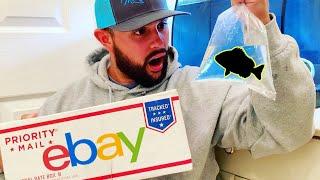 online-ebay-shopping-for-live-aquarium-pet-fish