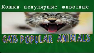 Кошки  популярные домашние животные