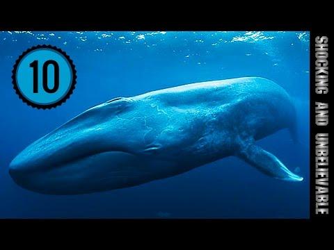 ус фото китовый