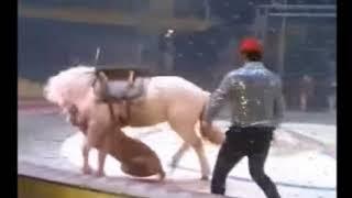 Нападение хищников на цирковую лошадь попало на видео
