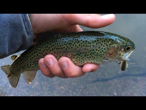 Lake Tabeaud Trout Fishing Fishing