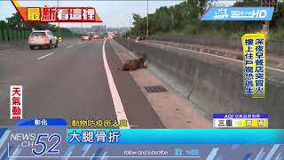 20180515中天新聞 撞「鹿」驚魂! 74線道竟有鹿 駕駛撞鹿釀回堵