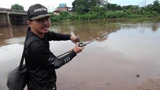 เชคหมายแม่น้ำน่านหลังฝนตก น้ำแดงๆยังพอหาแต้มได้อยู่ เหยื่อที่ใช้กระดี่คิงฟร็อกวายเบรชั่นจูเนียร์