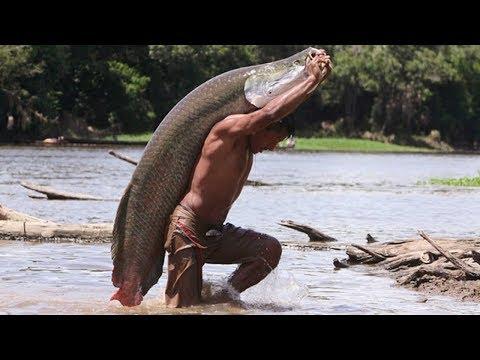 7 Poissons Monstrueux De l'Amazonie Que Ne Connaissiez