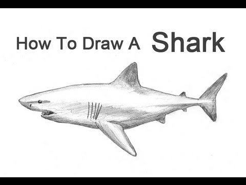 How to draw a shark great white youtube