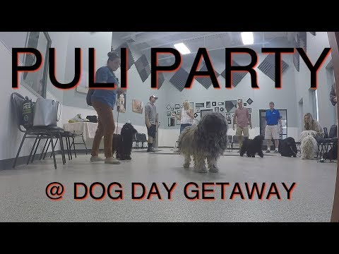 Puli Party @ Dog Day Getaway
