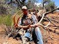 Utah elk shed hunt, losing Honey...