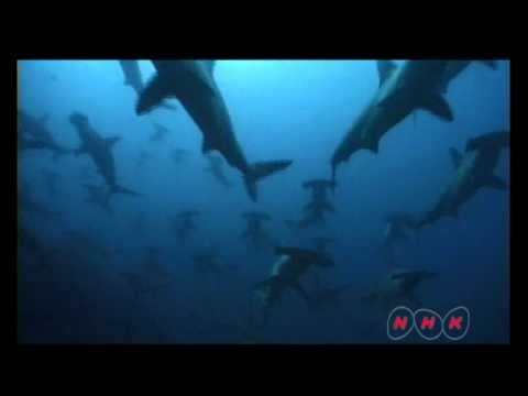 Cocos Island National Park (UNESCO/NHK)