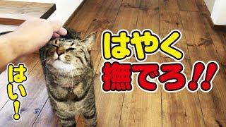 ツン猫さんが久しぶりに甘えてくるまでを密着! thumbnail