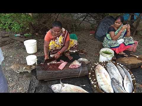 Cutting of fish