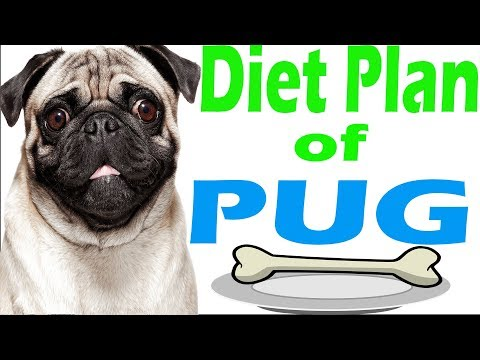 diet plan pug |  amazing facts in hindi | Animal Channel Hindi