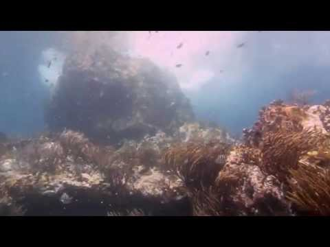 Sail Caribbean Divers - Vanishing Rock dive, British Virgin Islands