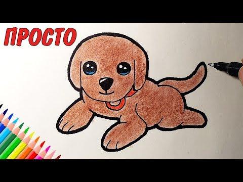 Как рисовать собак поэтапно