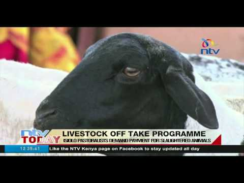 Isiolo pastrolists regret selling livestock to government in off-take programme