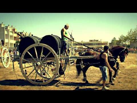 12° Fiera dei Cavalli - Madonna delle Grazie - Noha 08 Settembre 2013. Lu cavaddhru malecarne