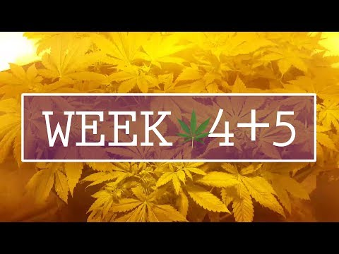 Week 4-5: Spread out: We need space!! - Indoor Cannabis Grow