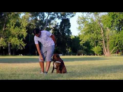 adiestramiento-canino