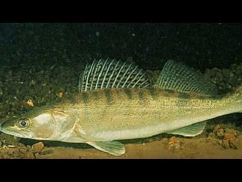 Какая  активность клева  рыбы ожидается  в июне.