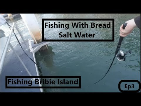 Ep3 Fishing Bribie Island ( Fishing With Bread)