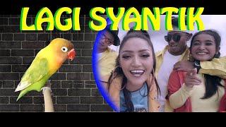 Single Terbaru -  Lagi Syantik Siti Badriah Versi Burung