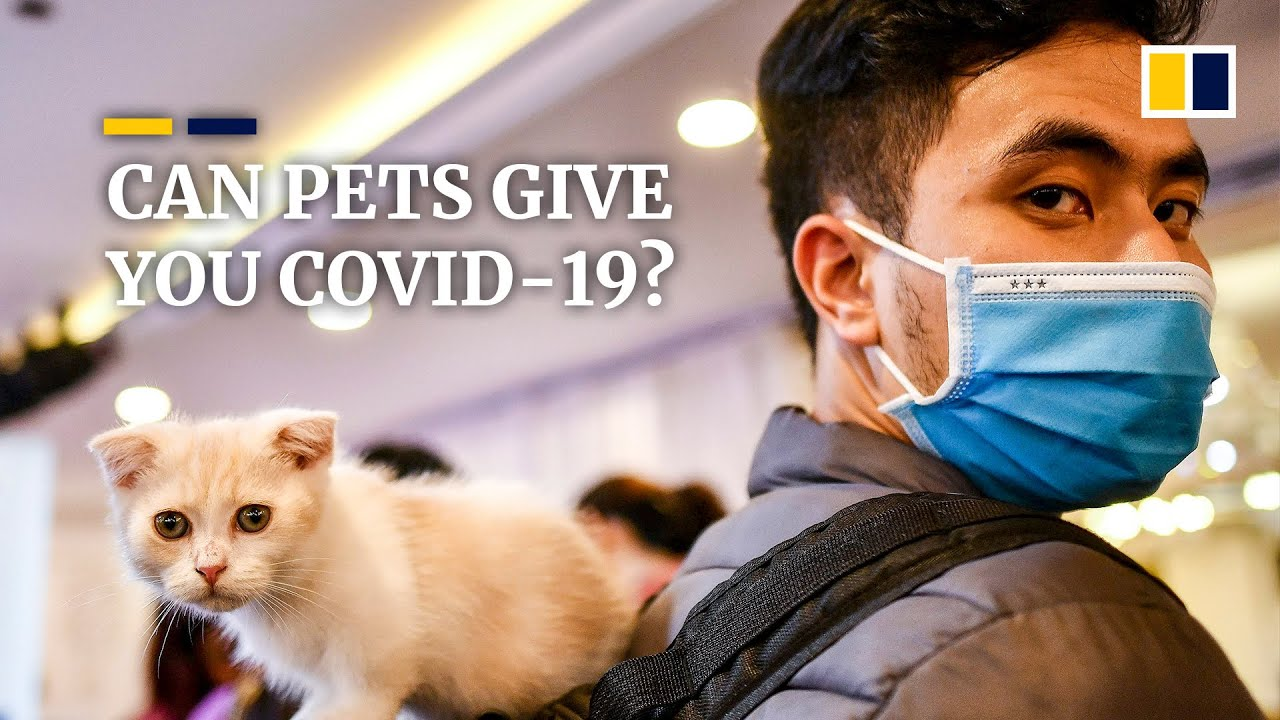 Pets Best Covid 19 Defence Is When Owners Protect Themselves Says Animal Health Expert South China Morning Post