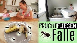 NEUES WANDTATTOO | BETTSCHUTZGITTER ANBRINGEN | FRUCHTFLIEGENFALLE 🐜 FamilyVlog #131