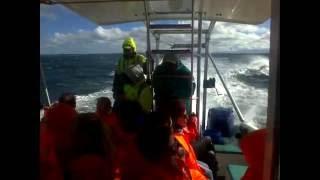 Kapstadt Haitauchen in Südafrika - Gansbaai Käfigtauchen