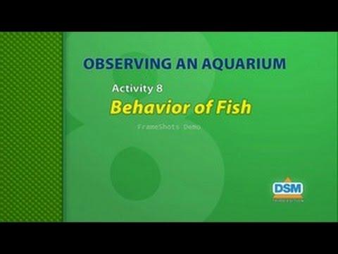 Observing An Aquarium - Activity 8: Behavior Of Fish
