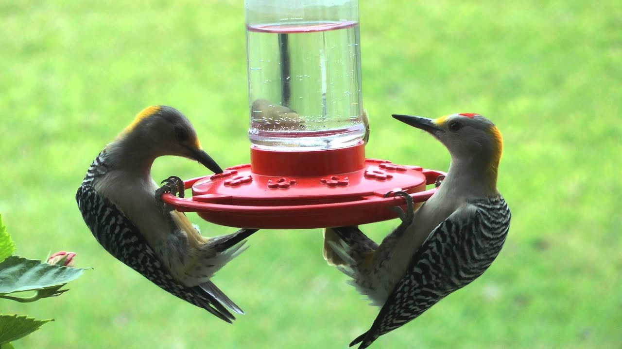 the jelly feeders and duncraft fruit bird best zoom feeder ultimate oriole
