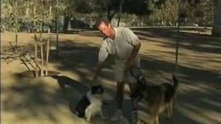 Service Dog Training Tips : Service Dog Training To Accept Strangers