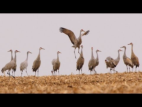 Goose Pond: The Story Of A Wetland And Its Neighbors  Trailer