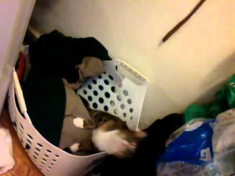 the Cat and the Laundry Basket