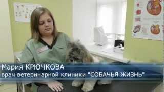 Как лечить зубы собаке? Зубной камень.Говорит ЭКСПЕРТ(http://dog-life.com/vetclinica Как выглядит зубной камень и налет? Почему образуется? Какие последствия от заболевания?..., 2012-10-12T09:43:20.000Z)