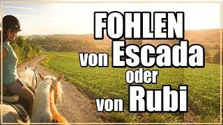 FOHLEN von Escada oder von Rubi ✮ FMA  ♥